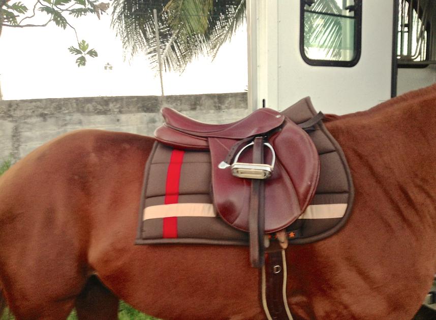 HorseBox, la box du cheval sur mesure