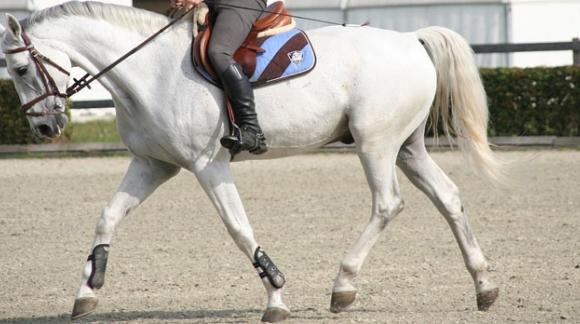 Etriers : équiper correctement sa selle de cheval