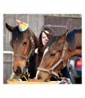 Gâteau spécial chevaux Animal Cake