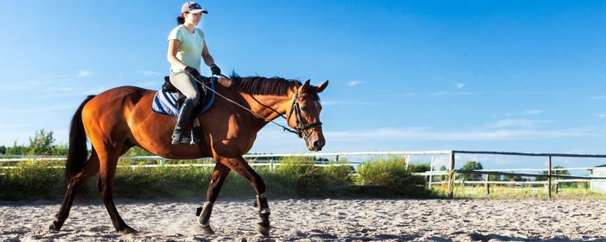 Équiper le cheval, le cavalier, les écuries...
